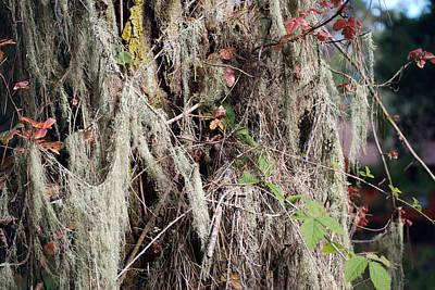 Photograph - Lace Lichen by Harvey Barrison