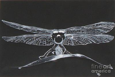Ink Drawing - Lace Wings by Leigha Sherman