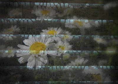 Lacey Daisy Song Art Print by Cindy Wright
