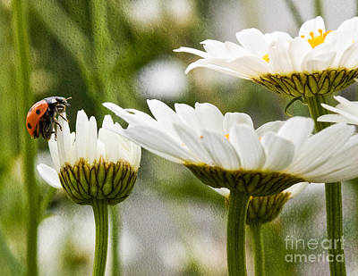 Photograph - Lady Bug Loves A Flower by Bobbi Feasel