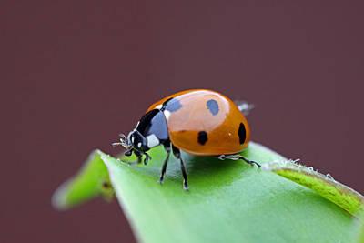 Door Locks And Handles - Lady Bug by Paul Slebodnick