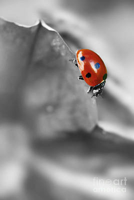 Photograph - Ladybird On Leaf 1.0 by Yhun Suarez