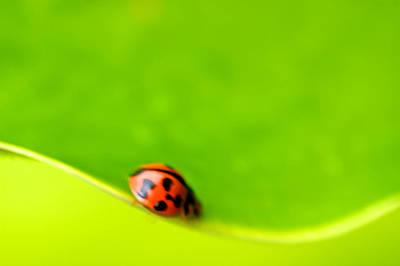 Ladybug Abstract Art Print