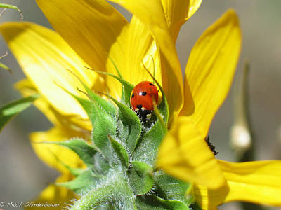 Art Print featuring the photograph Ladybug by Mitch Shindelbower