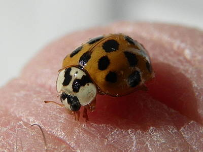 Ladybug On Finger Art Print by Chad and Stacey Hall