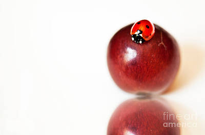 Photograph - Ladybug On Grape by Artist and Photographer Laura Wrede