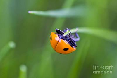 Ladybug Topsy Turvy Art Print by Donna Munro