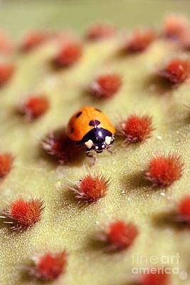 Ladybug2 Art Print