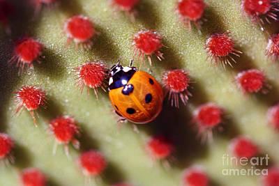 Photograph - Ladybug3 by Morgan Wright
