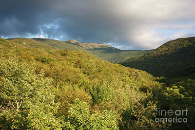 Lafayette Brook Scenic Area - White Mountains New Hampshire Usa Art Print