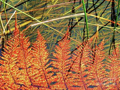 Photograph - Lagoon Fern by Michele Penner