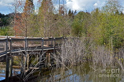Photograph - Lake Bonny Boardwalk by Carol  Bradley