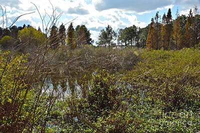 Photograph - Lake Bonny Swamp by Carol  Bradley