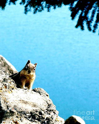 Photograph - Lake Dillon Chipmunk by Christine S Zipps