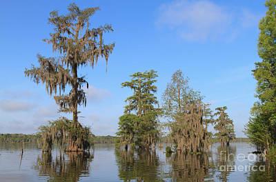 Cypress Swamp Photograph - Lake Martin by Louise Heusinkveld