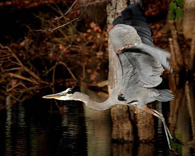 Lake Murray Heron Art Print by Skip Willits