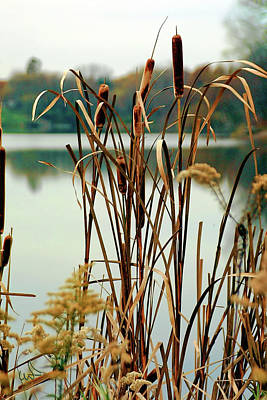 Photograph - Lake Side Cat Tails by Michael Flood