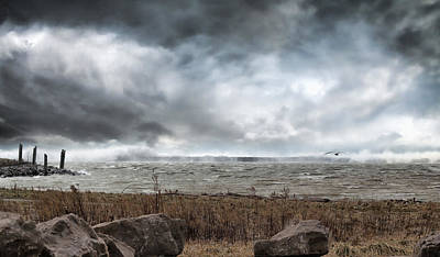 Water Buffalo Wall Art - Photograph - Lake Storm by Peter Chilelli