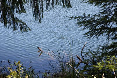 Photograph - Lake Tree Ripples by Peter Dyke