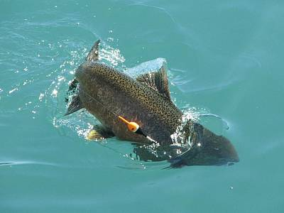 Photograph - Lake Trout by Keith Stokes