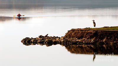 Photograph - Lake Visitors by Paul W Faust -  Impressions of Light