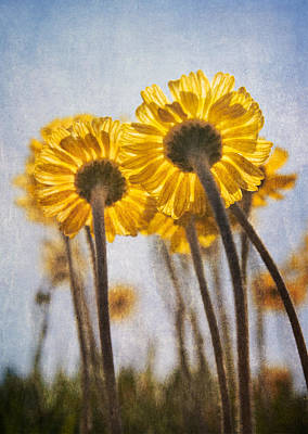 Photograph - Lakeside Daisies by Dale Kincaid