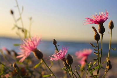 Photograph - Lakeside Flowers by Scott Hovind