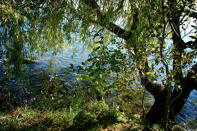 Photograph - Lakeside Tree by Kathleen Grace