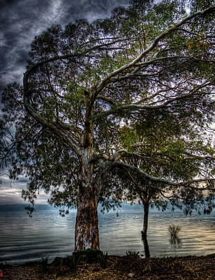 Lakeside Tree Art Print by Tommy Farnsworth