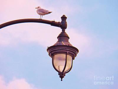 Photograph - Lampost Gull   Two by Judy Via-Wolff