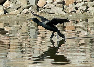 Art Print featuring the photograph Landing Cormorant by Stephen  Johnson