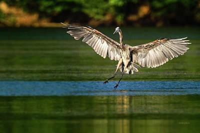 Photograph - Landing Gear Down by Steven Llorca