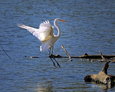 Photograph - Landing Gear Down by Sue Stefanowicz