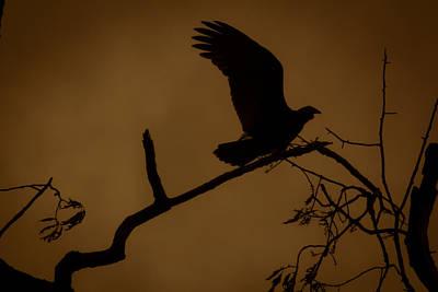 Photograph - Landing  by Kim Henderson