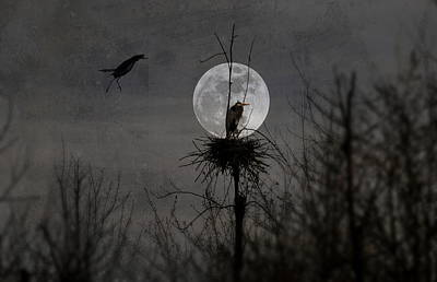 Photograph - Landing On The Moon by Emily Stauring