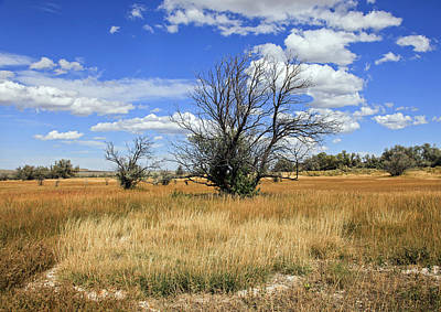 Photograph - Landscape In Wy by James Steele