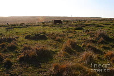 Landscape With Cow Grazing In The Field . 7d9935 Art Print