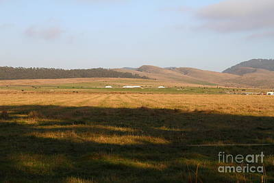 Landscape With Cows Grazing In The Field . 7d9966 Art Print