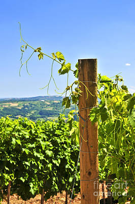 Landscapes Royalty-Free and Rights-Managed Images - Landscape with vineyard 2 by Elena Elisseeva