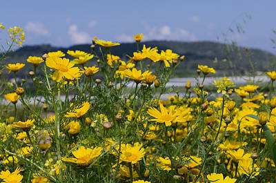 Photograph - Landscape With Wild Flowers by Michael Goyberg