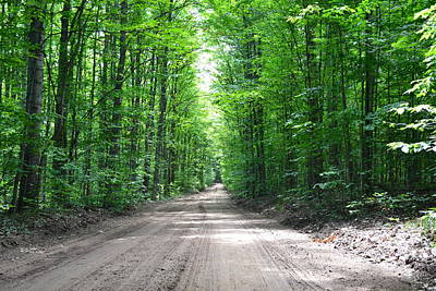 Photograph - Lane In The Woods by Ted Kitchen