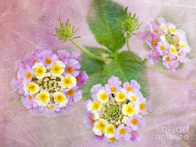 Pink Confetti Photograph - Lantana Camara Confetti by Betty LaRue