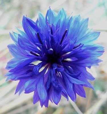 By Barbara St Jean Photograph - Lapis Lazuli by Barbara St Jean