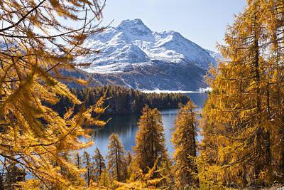 Larch Trees By Lake Sils And Piz De La Margna, Engadin, Switzerland Art Print