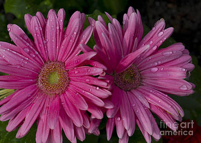 Photograph - Large Pink Floral And Fly by Donna Munro