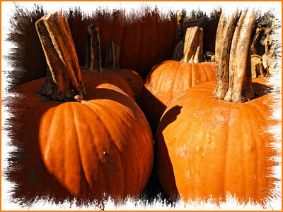 Photograph - Large Sunlit Pumpkins In A Row by Chantal PhotoPix