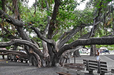 Art Print featuring the photograph Largest Banyan Tree In The Usa by Kirsten Giving