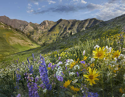 Delphinium Photograph - Larkspur And Sunflowers Albion Basin by Tim Fitzharris