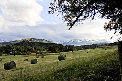 Photograph - Last Hay Before Winter by Marta Alfred