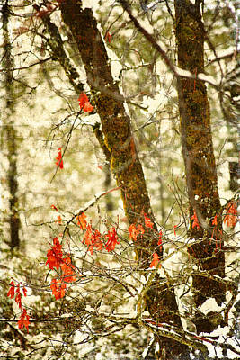 Last Leaves Clinging Art Print by Bonnie Bruno